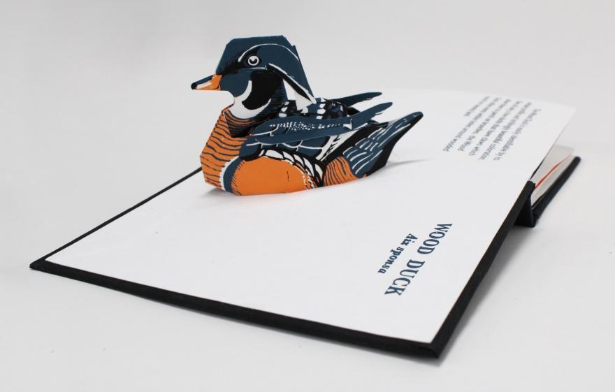 licata_danish_waterbirdsbook6_kilpatrick