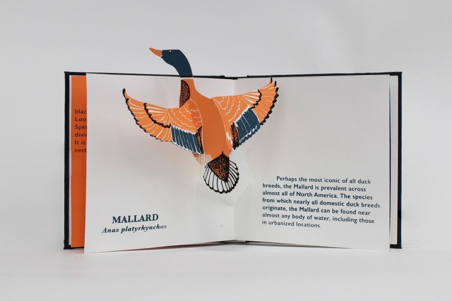 licata_danish_waterbirdsbook7_kilpatrick